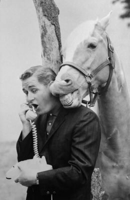 Mr Ed and the Talking Horse